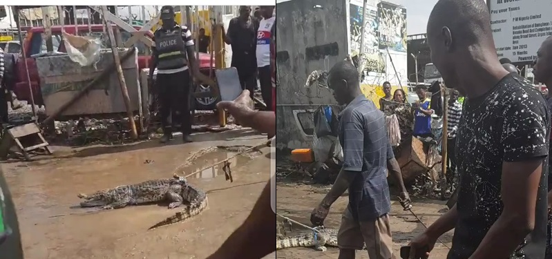 Police Arrest stray Crocodile in Lagos island, drags it to the station for questioning