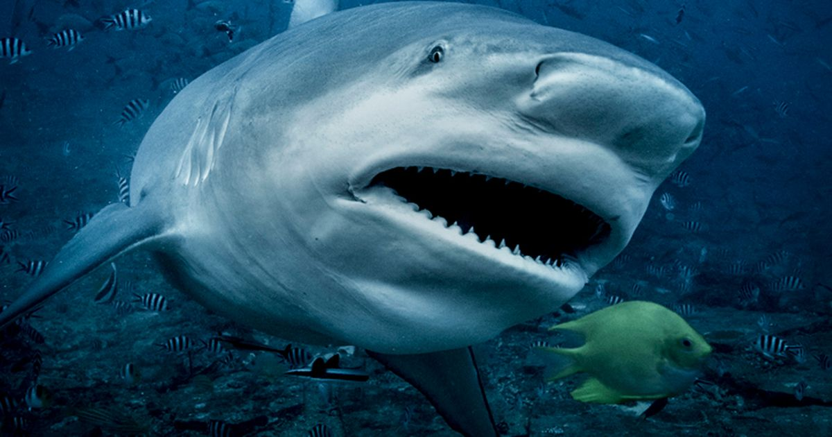 Shark experts baffled after tracking tag shows 6-foot-animal wandering around university
