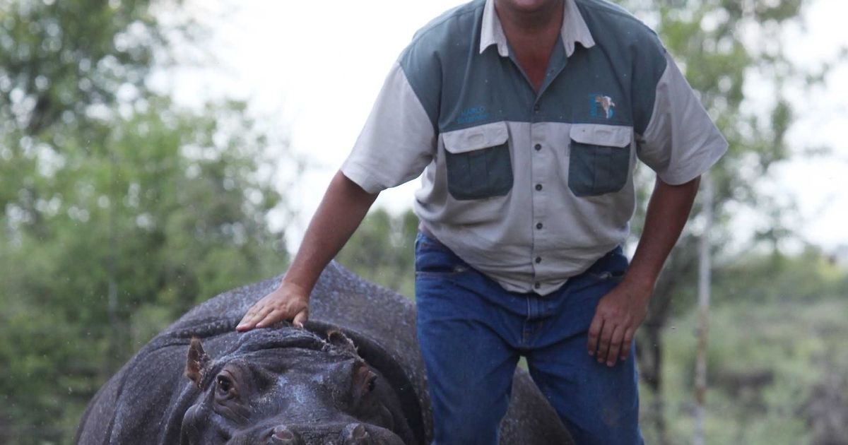Grisly injuries of man mutilated and killed by pet hippo he swam with and rode like horse
