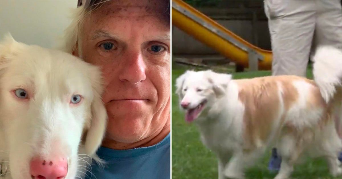 Missing deaf rescue dog adorably reunited with deaf owner thanks to GPS collar