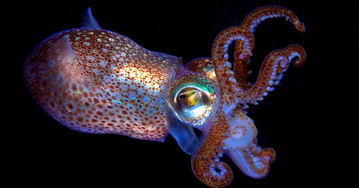 NASA and Elon Musk to send glow in the dark squids and waterbears in to space