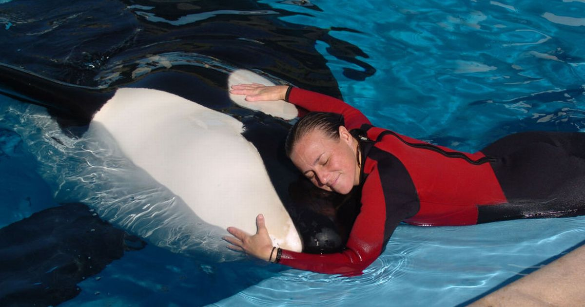 SeaWorld trainer's harrowing last moments as whale did 'deep dive' with body in mouth
