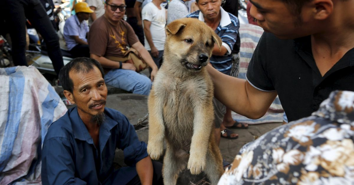 Dog meat festival where whimpering animals are boiled and burned alive begins in China