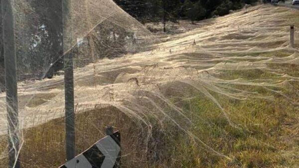 Chilling photos show 'spider apocalypse' emerge after Australian floods