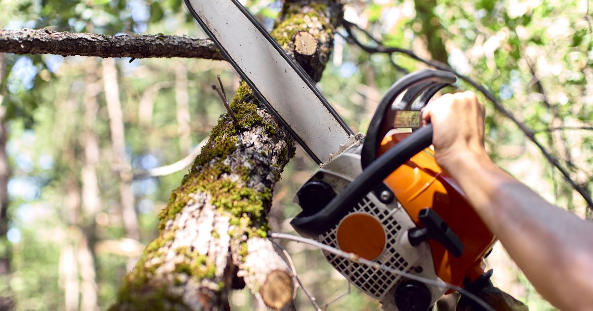 Horror as man is slashed in neck with chainsaw while cutting down tree