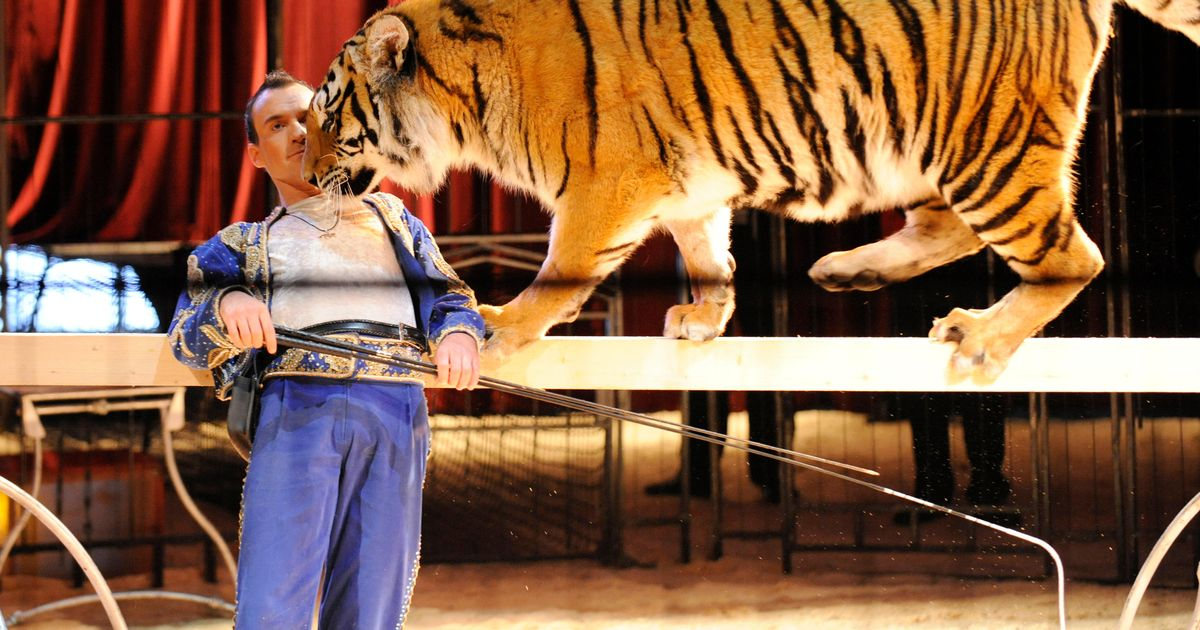 Tiger trainer's grisly injuries after big cats 'went nuts' savaging him during live show