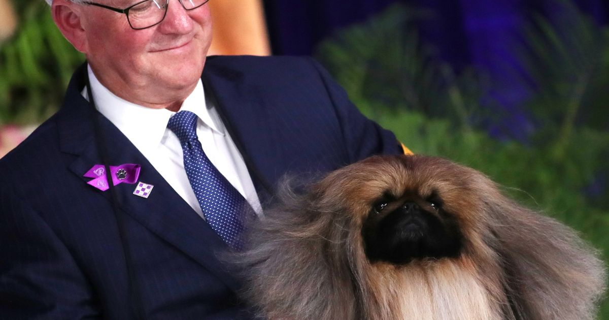 Victory for Wasabi! Pekingese wins the spot of top dog at US version of Crufts