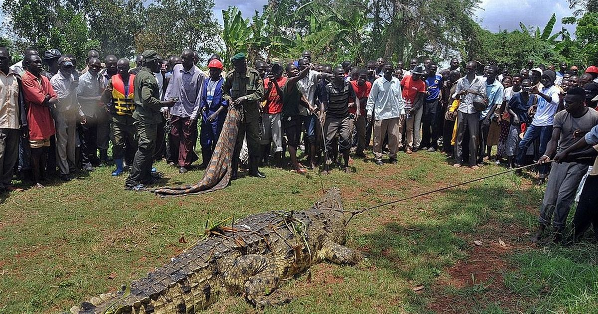 'Immortal' bloodthirsty monster croc 'Osama' has eaten 80 villagers - and refuses to die