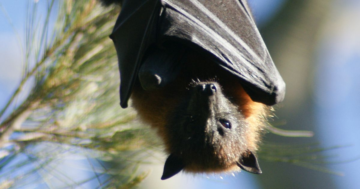 Bats 'were not sold at Wuhan wet markets' claims report, fuelling Covid lab leak theory