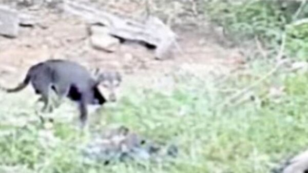 Stray dogs seen eating bodies of dead Covid patients as cemeteries struggle to cope