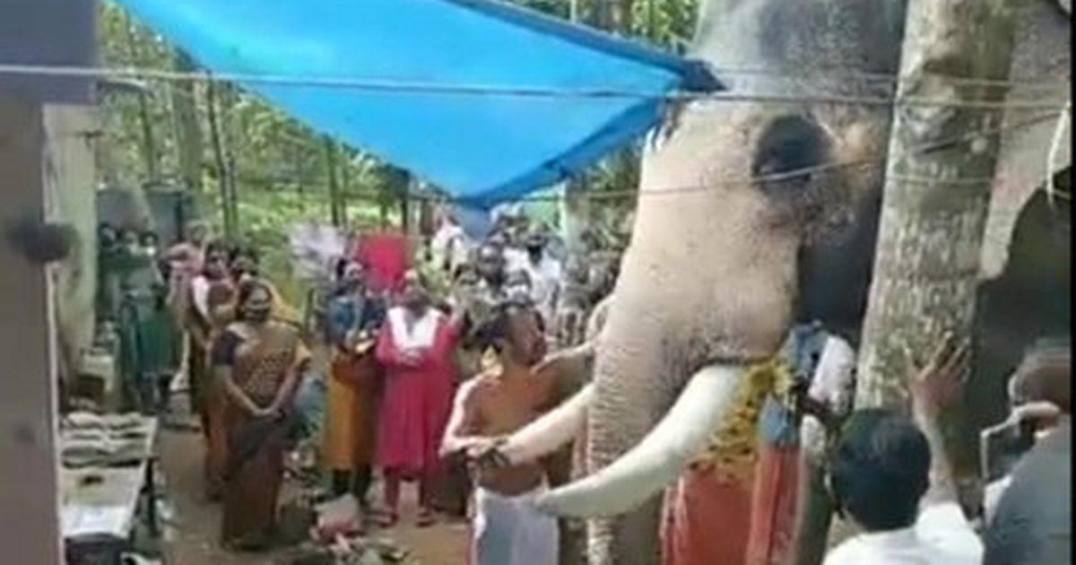Heartbroken elephant walks 15 miles to attend human best friend's funeral