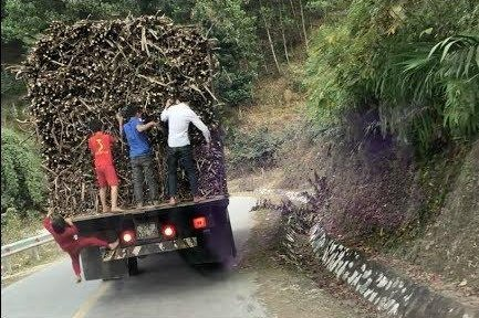 16-Year-Old Boy Dies Pulling Sugarcane From Moving Truck