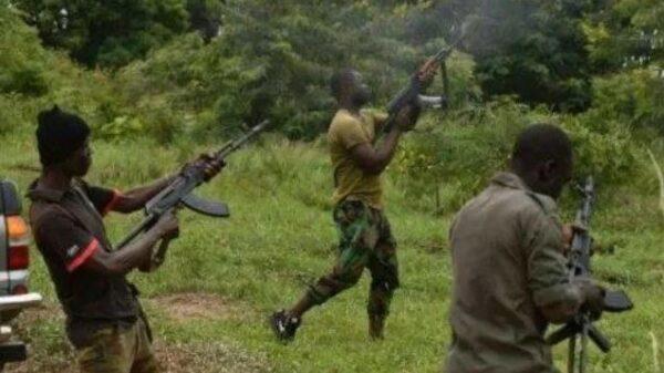 Hunters Nab Bandits Who Turned Kogi Forest Into Indian Hemp Farm