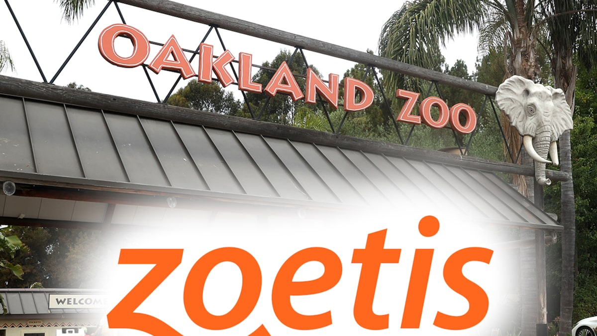 Oakland Zoo Animals Receive Experimental COVID Vaccine En Masse