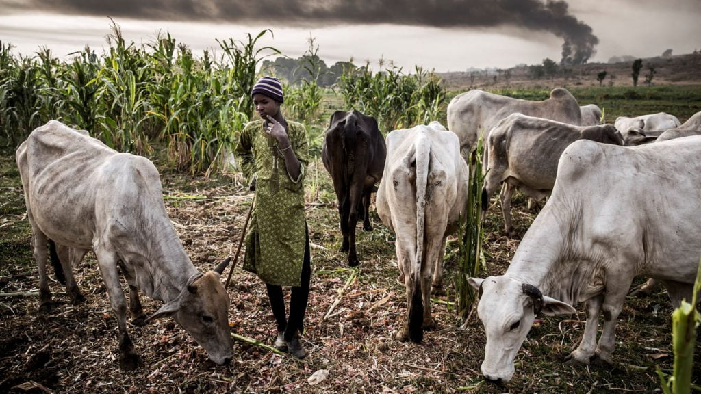 Tension In Taraba As Emir Gives Herders 30-Day Ultimatum To Vacate Forests
