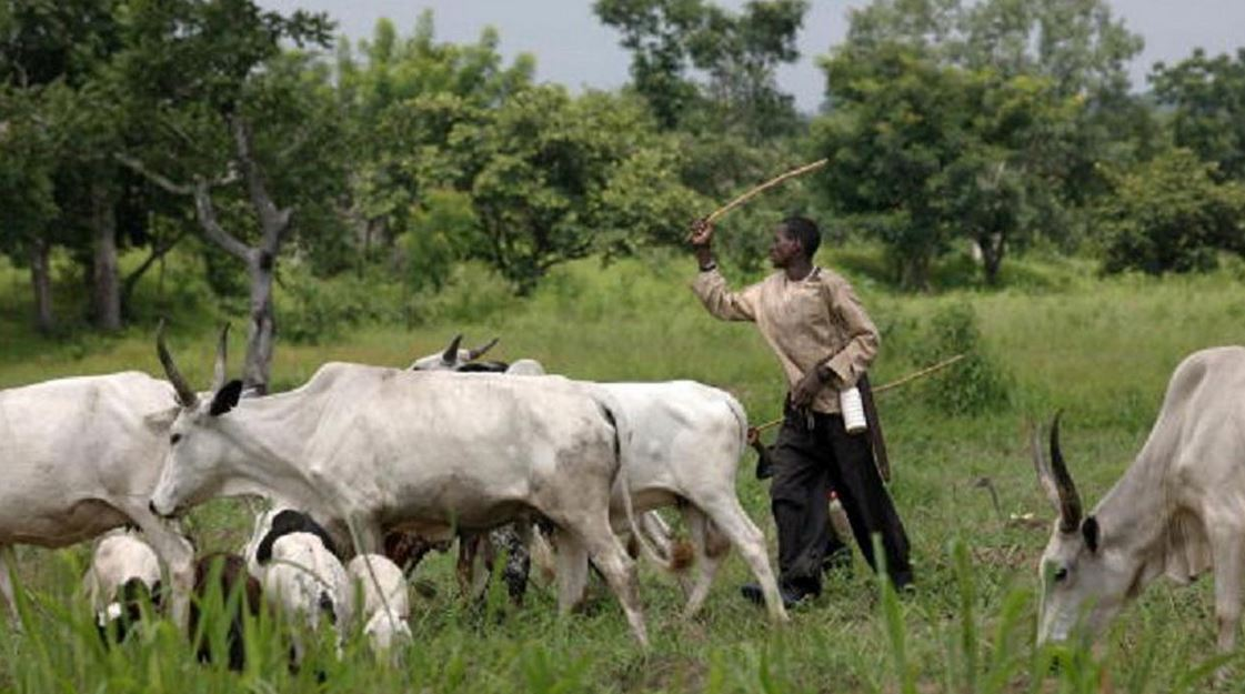 Herdsmen In Delta State Reject 5,000Sqm Grazing Land Proposed By Lawmakers, Want At Least 30,000 Sqm For Each Local Govt