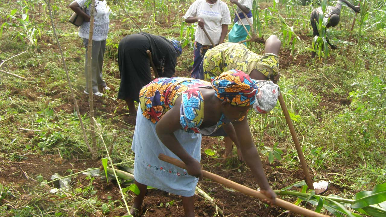 ActionAid seeks Central Bank's support for women farmers | The Guardian Nigeria News