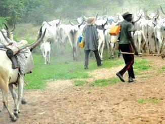 Herdsmen, flee ,cow, kills, months old ,baby ,Delta