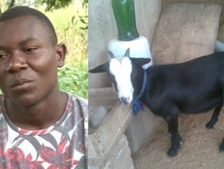 Kenyan Man reportedly runs mad after his new girlfriend allegedly turned into goat while in bed with him