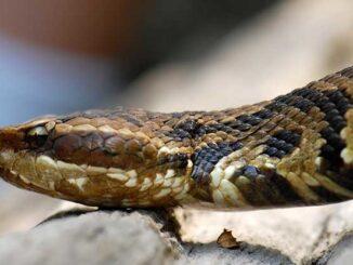 "We Keep Snakes In Our Home-Woman Speaks As Bulawayo Faith Healer's ""Pet"" Causes Uproar"