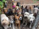 School proprietor's 11 dogs maul toddler to death in Anambra